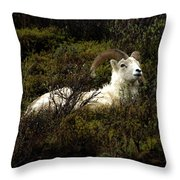 Dall Sheep Ram Throw Pillow