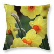Dallas Daffodils 01 Throw Pillow