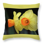 Dallas Daffodils 07 Throw Pillow