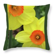 Dallas Daffodils 36 Throw Pillow