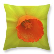 Dallas Daffodils 40 Throw Pillow