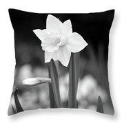 Dallas Daffodils 53 Throw Pillow