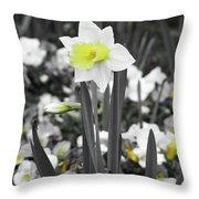 Dallas Daffodils 54 Throw Pillow