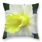 Dallas Daffodils 55 Throw Pillow