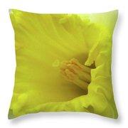 Dallas Daffodils 73 Throw Pillow