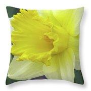 Dallas Daffodils 80 Throw Pillow