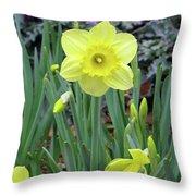 Dallas Daffodils 83 Throw Pillow