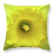 Dallas Daffodils 87 Throw Pillow