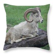 Dall's Sheep Throw Pillow