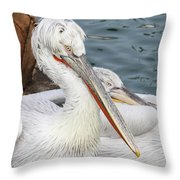 Dalmatian Pelican #3 Throw Pillow