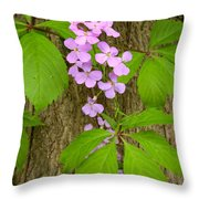 Dame's Rocket Wildflowers And Creeping Vines Throw Pillow