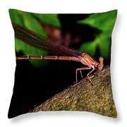 Damselfly 006 Throw Pillow