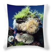 Dance Of The Anemones Throw Pillow