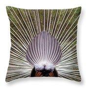 Dancing Peacock, Kanha National Park Throw Pillow