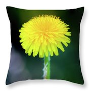 Dandelion Flower Throw Pillow