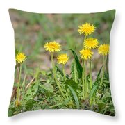 Dandelion Flowers Throw Pillow