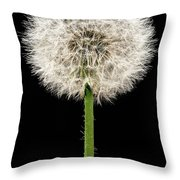 Dandelion Gone To Seed Throw Pillow