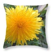 Dandelion In Bloom Throw Pillow