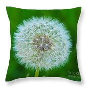 Dandelion Seed Head Expressionist Effect Throw Pillow
