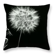 Dandelion Thirty Six Throw Pillow