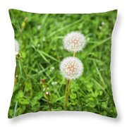 Dandelions In Connecticut Throw Pillow