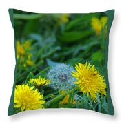 Dandelions, Young And Old Throw Pillow
