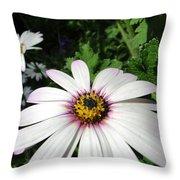 Dandy Daisy Throw Pillow