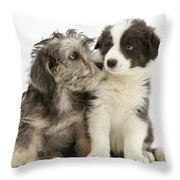 Dandy Dinmont Terrier And Border Collie Throw Pillow