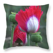 Danish Flag Papaver Somniferum Opium Poppies - Flowers And Pods Throw Pillow