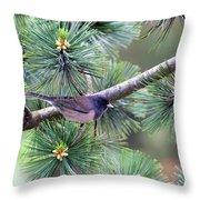 Dark-eyed Junco On A Pine Tree Throw Pillow