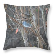 Dark Eyed Junco Perched On Tree Limb Throw Pillow