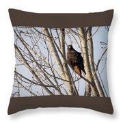 Dark-morph Western Red-tailed Hawks Throw Pillow