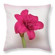 Dark Pink Amaryllis Throw Pillow