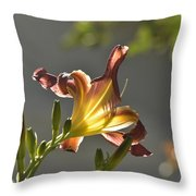 Dark Red Day Lily With Sun Shining Through I Throw Pillow