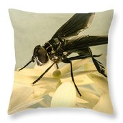Dark Winged Comb Footed Fly Throw Pillow