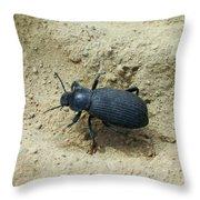 Darkling Beetle In Sand Throw Pillow