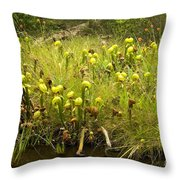 Darlingtonia Plants Grow Beside Throw Pillow