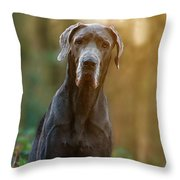 Darwin Throw Pillow