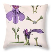 Darwins Orchis Pyramidalis, Illustration Throw Pillow