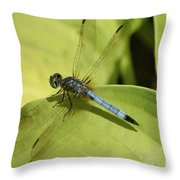 Dasher In My Pond Throw Pillow