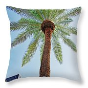 Date Palm In The City Throw Pillow