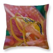 Day Lilly Stamens 1a Throw Pillow