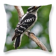 Daydreaming Downy Woodpecker Throw Pillow