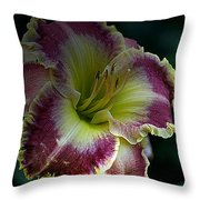 Daylily Collection # 13 Throw Pillow