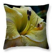 Daylily Collection # 5 Throw Pillow