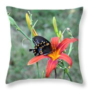Daylily Delight 2 Throw Pillow