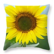 Dazzling Sunflower Throw Pillow