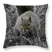 Dc Squirrel Throw Pillow