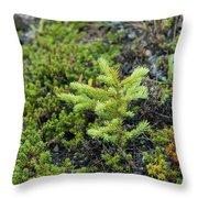 Ddp Djd Spruce Seedling 16 Throw Pillow