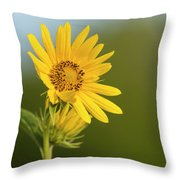 Ddp Djd Sunflower 2639 Throw Pillow